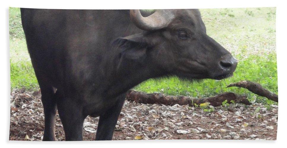Buffalo Bath Sheet featuring the photograph Lone Buffalo by Serah Mbii