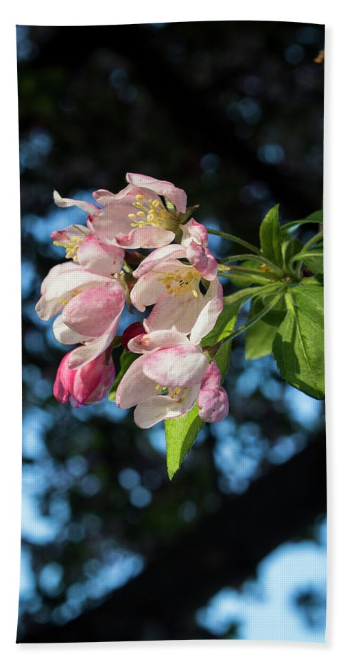 Cherry Blossoms Hand Towel featuring the photograph Lone Cherry Blossoms by Denise Harty