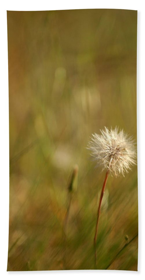 Dandelion Flower Wildflower Nature Botanical Hand Towel featuring the photograph Lone Dandelion 2 by Jill Reger