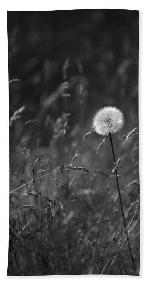Botanical Bath Sheet featuring the photograph Lone Dandelion Black And White by Jill Reger