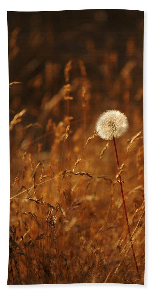 Nature Outdoors Field Dandelion Alone Single Sole Botanical Bath Sheet featuring the photograph Lone Dandelion by Jill Reger