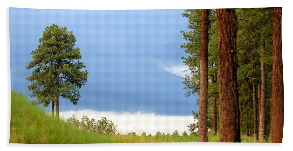Forest Hand Towel featuring the photograph Lone Pine by Jill Reger