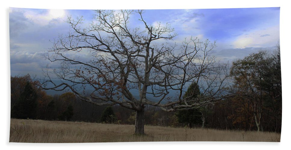 Tree Hand Towel featuring the photograph Lone Tree by Paul A Williams