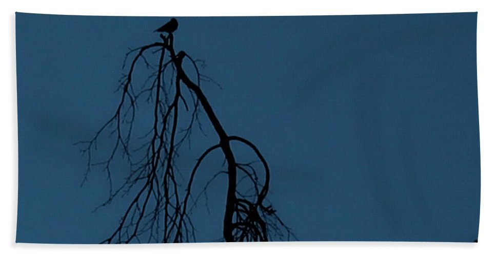 Bird Hand Towel featuring the photograph Lonesome Dove by Mykel Davis
