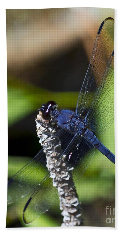 Dragonfly Bath Sheet featuring the photograph Long Blue by Ken Frischkorn