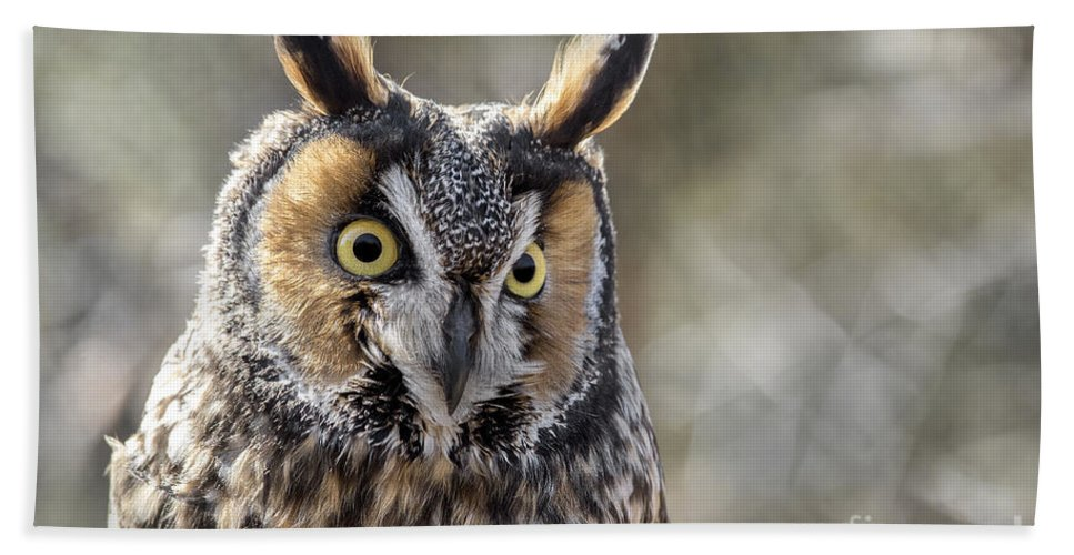 Long Eared Owl Hand Towel featuring the photograph Long Eared Owl by Angie Rea