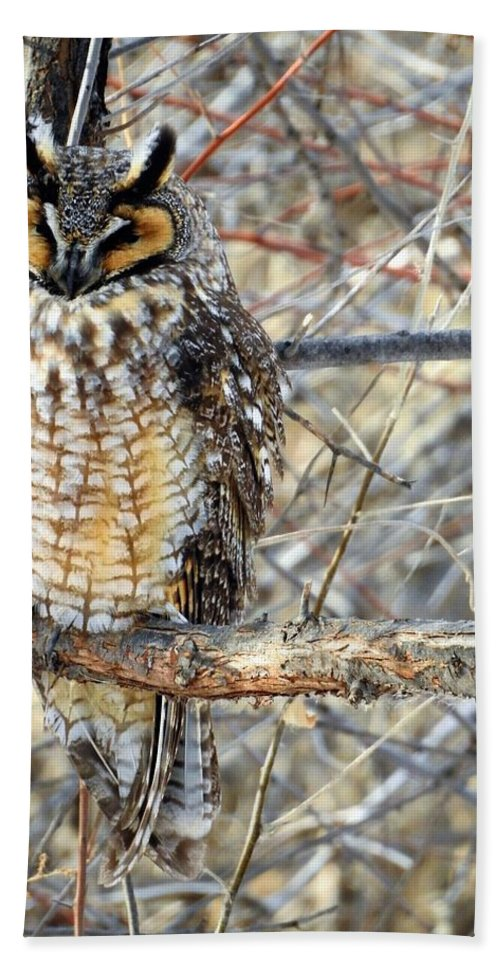 Long Eared Owl Hand Towel featuring the photograph Long Eared Owl Resting by Nicole Belvill