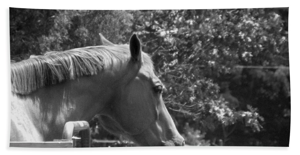 Horse Bath Sheet featuring the photograph Longing by Sandi OReilly