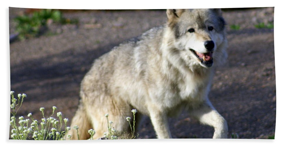 Wildlife Hand Towel featuring the photograph Lonly Wolf by Marty Koch