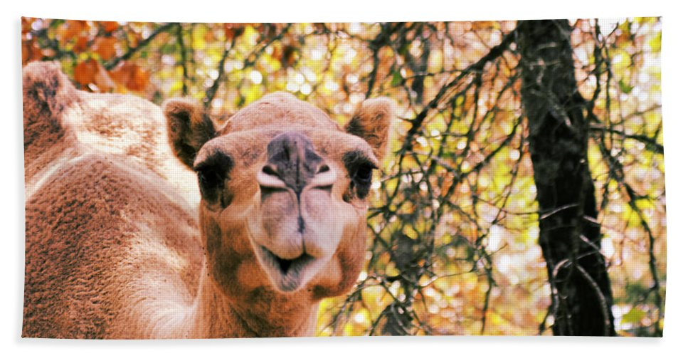 Camel Hand Towel featuring the photograph Look At Me by Douglas Barnard