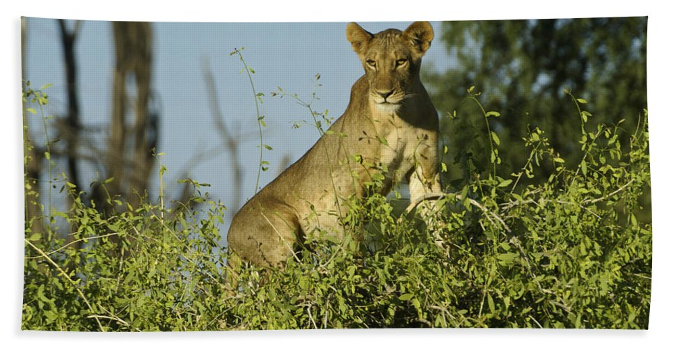 Africa Hand Towel featuring the photograph Look How High I Can Climb by Michele Burgess