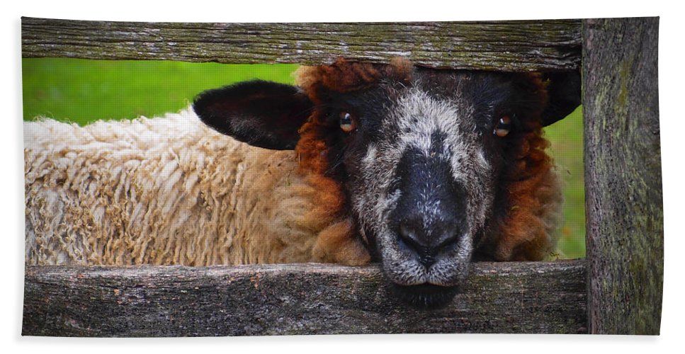 Lookin At Ewe Bath Towel featuring the photograph Lookin At Ewe by Skip Hunt