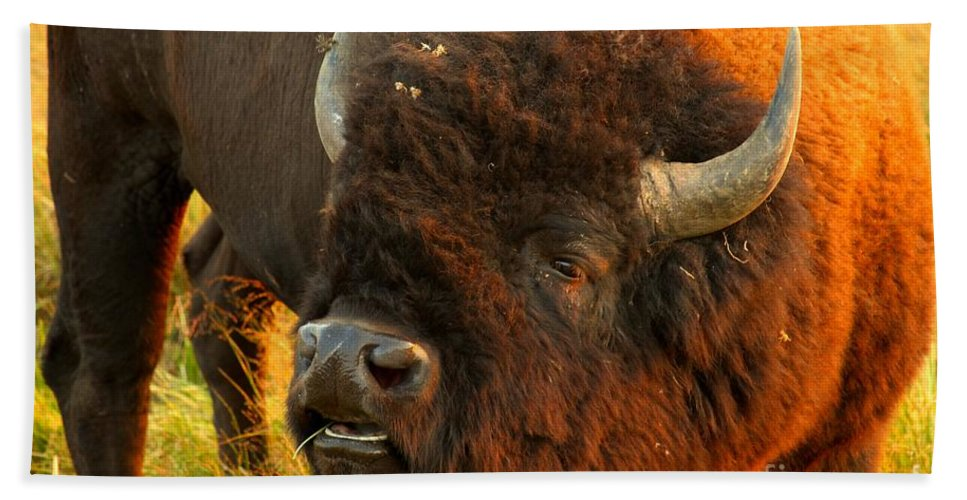 Bison Hand Towel featuring the photograph Lookin For Some Action by Adam Jewell