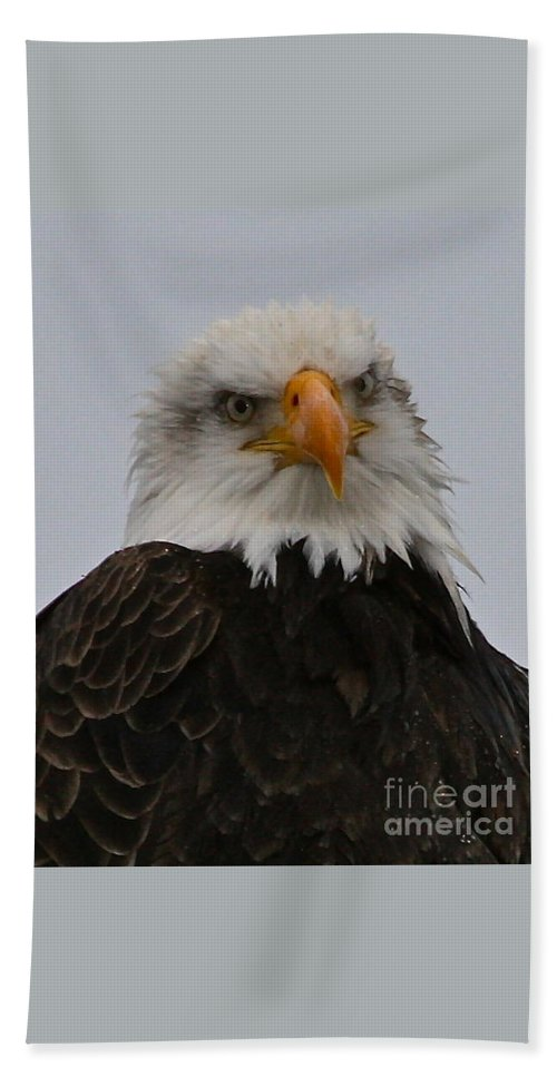 Eagle Bath Sheet featuring the photograph Looking At You by Rick Monyahan