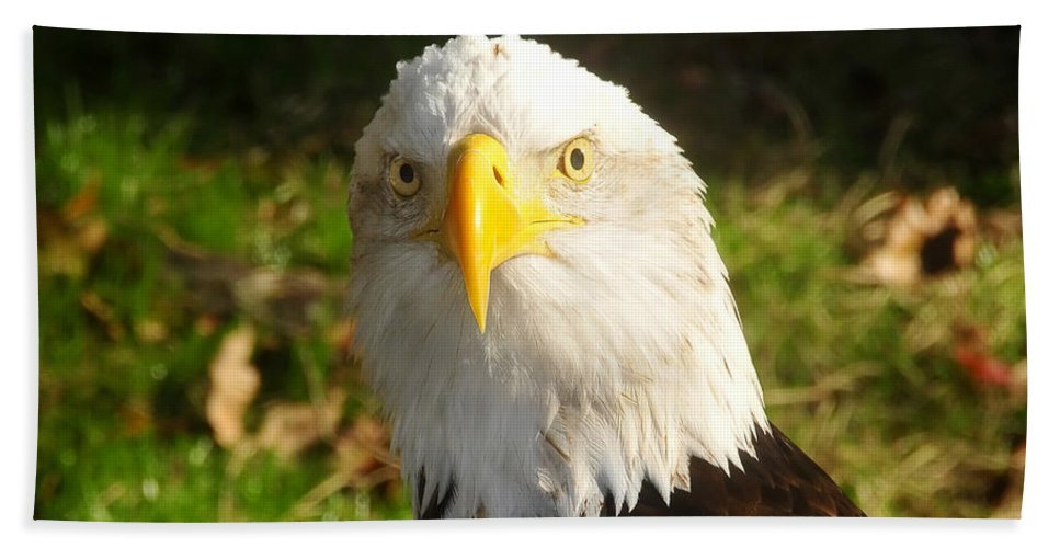 American Bald Eagle Hand Towel featuring the photograph Looking Eagle by David Lee Thompson