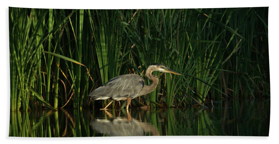 Animals Bath Sheet featuring the photograph Looking For Breakfast by Ernie Echols