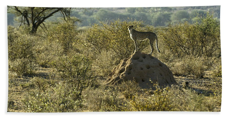Africa Hand Towel featuring the photograph Looking For Dinner by Michele Burgess