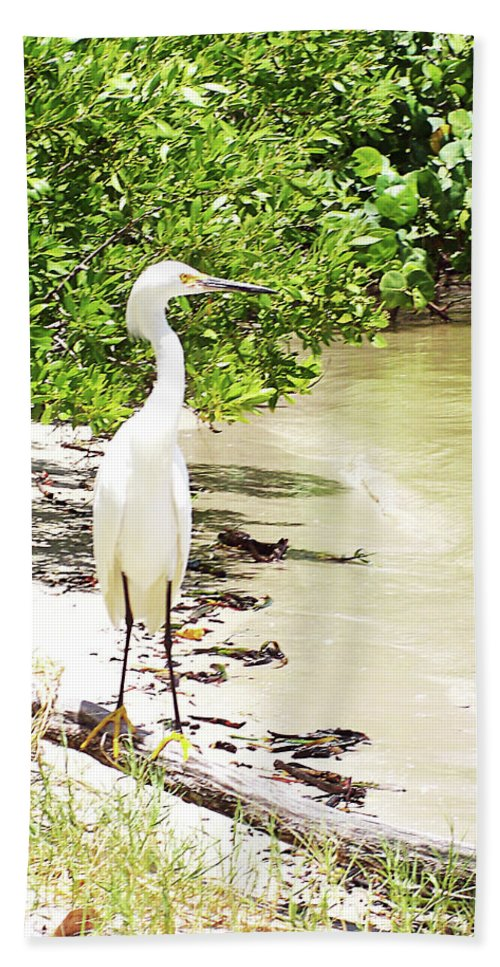 Florida Hand Towel featuring the photograph Looking For Lunch Gp by Chris Andruskiewicz