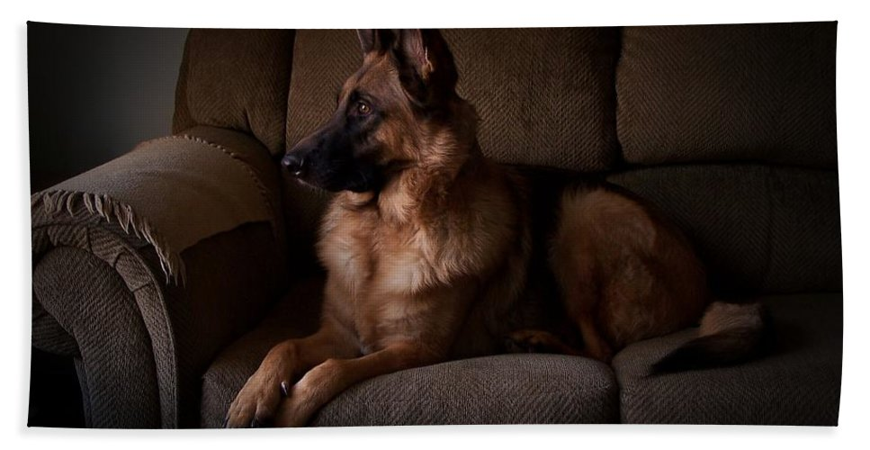 German Shepherd Dogs Hand Towel featuring the photograph Looking Out The Window - German Shepherd Dog by Angie Tirado