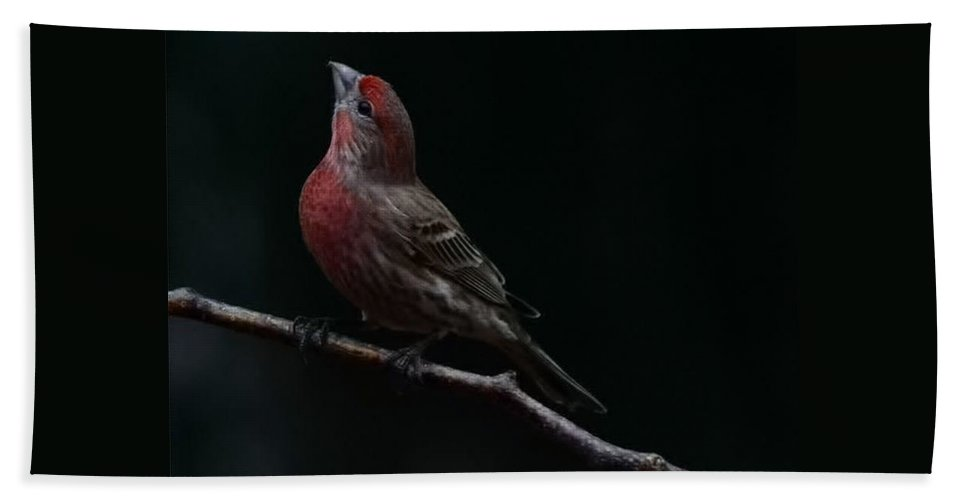 Finch Bath Sheet featuring the photograph Looking Towards Heaven by Gaby Swanson