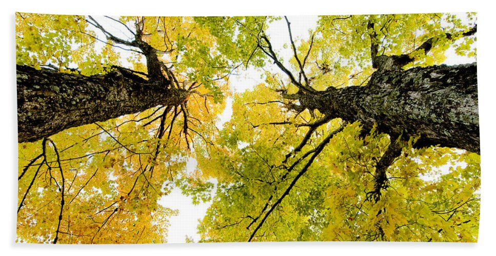 Fall Bath Sheet featuring the photograph Looking Up At Fall by Greg Fortier