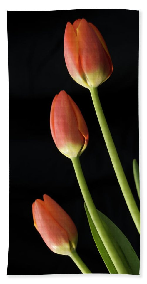 Tulip Hand Towel featuring the photograph Looking Up by Michael Peychich