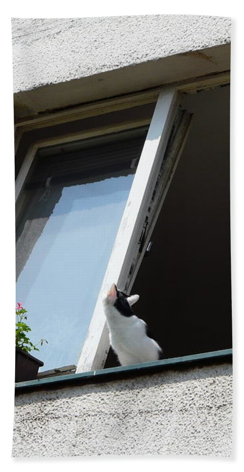 Cat Hand Towel featuring the photograph Looking Up by Valerie Ornstein