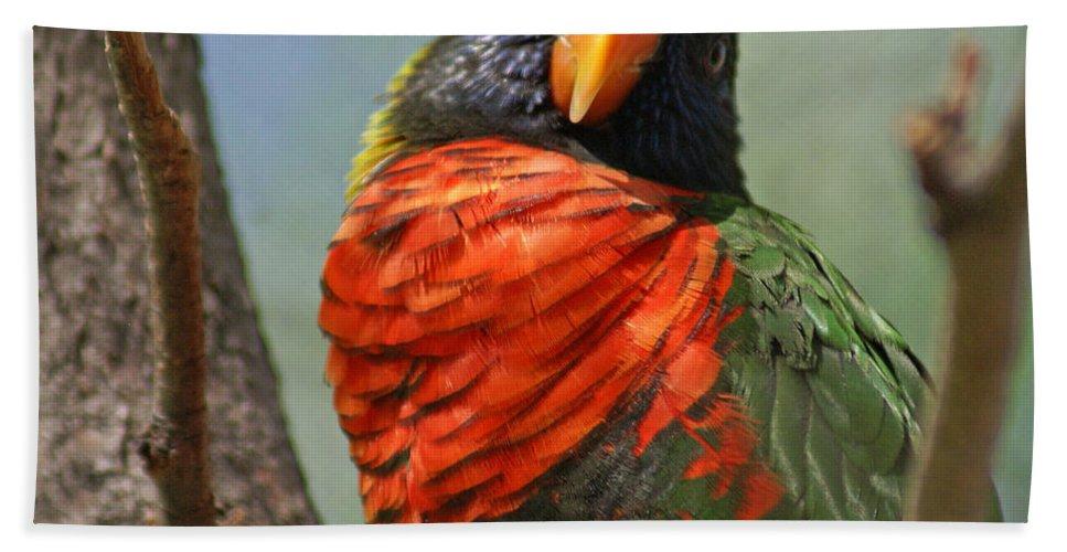 Bird Bath Sheet featuring the photograph Lorikeet by Heather Coen