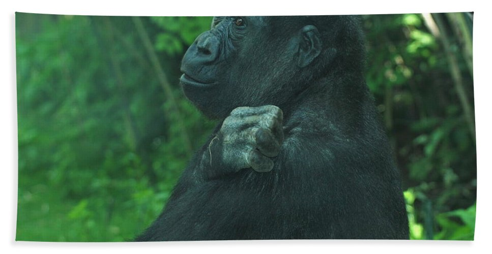 Gorilla Hand Towel featuring the photograph Lost In Thought by Richard Bryce and Family