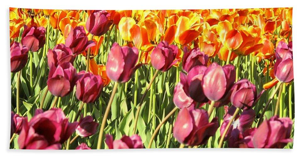 Tulips Bath Sheet featuring the photograph Lots Of Tulips by Ian MacDonald