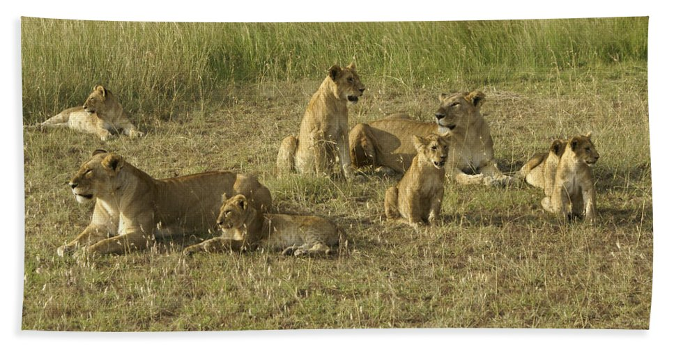 Africa Hand Towel featuring the photograph Lotsa Lions by Michele Burgess