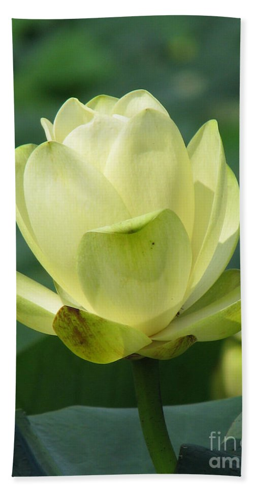 Lotus Bath Towel featuring the photograph Lotus by Amanda Barcon