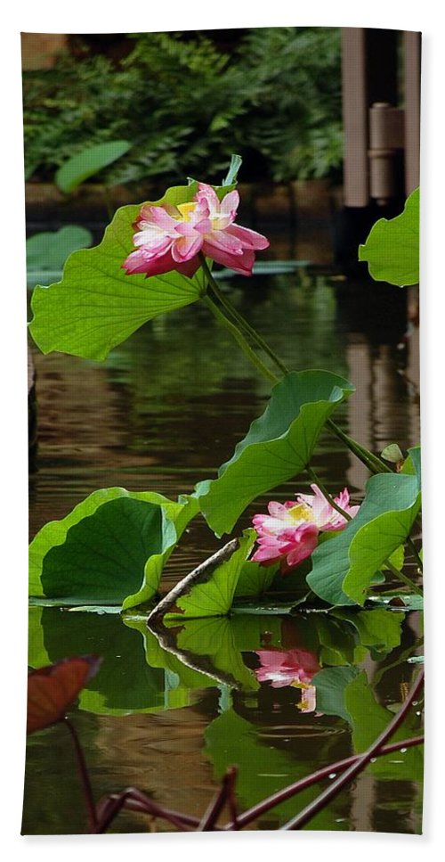 Lotus Flower Hand Towel featuring the photograph Lotus Flower by Robert Meanor