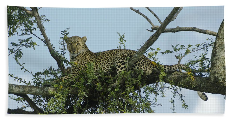 Africa Bath Towel featuring the photograph Lounging Leopard by Michele Burgess