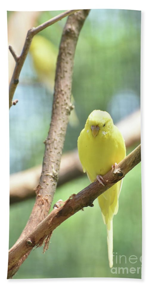 Budgie Hand Towel featuring the photograph Lovable Little Budgie Parakeet Living In Nature by DejaVu Designs