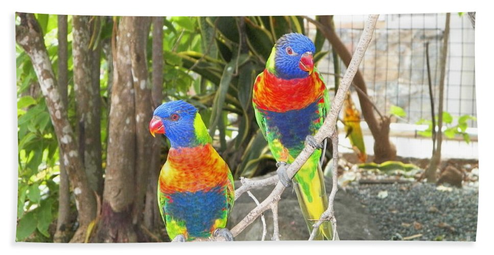 Lorikeets Bath Sheet featuring the photograph Love Birds by Gina Sullivan