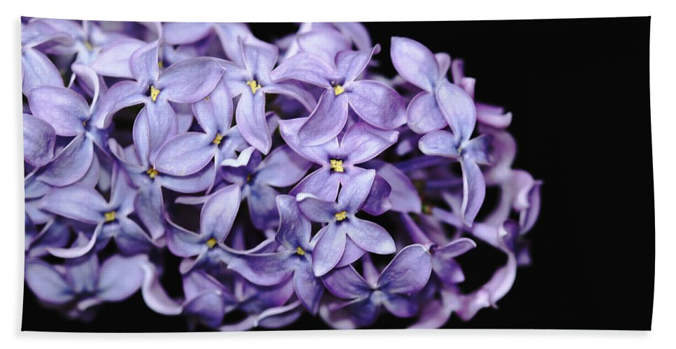 Lilacs Hand Towel featuring the photograph Love In Lilac by Debbie Oppermann