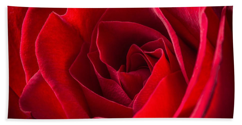 Love Is A Red Rose Bath Sheet featuring the photograph Love Is A Red Rose by Dale Kincaid