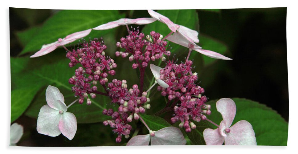Hydrangea Hand Towel featuring the photograph Lovely by Amanda Barcon