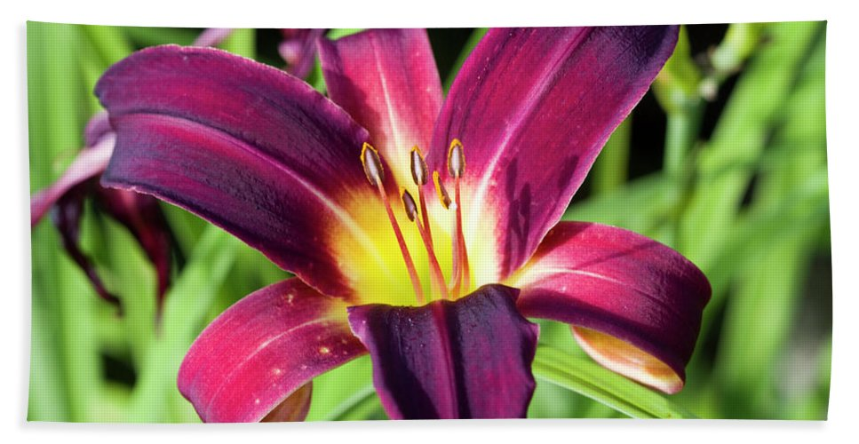 Daylily Bath Sheet featuring the photograph Lovely Day Lily by Kathy Clark