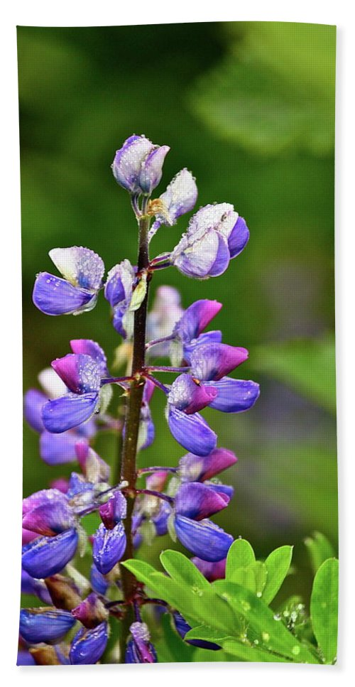 Lupine Bath Sheet featuring the photograph Lovely Lupine by Diana Hatcher