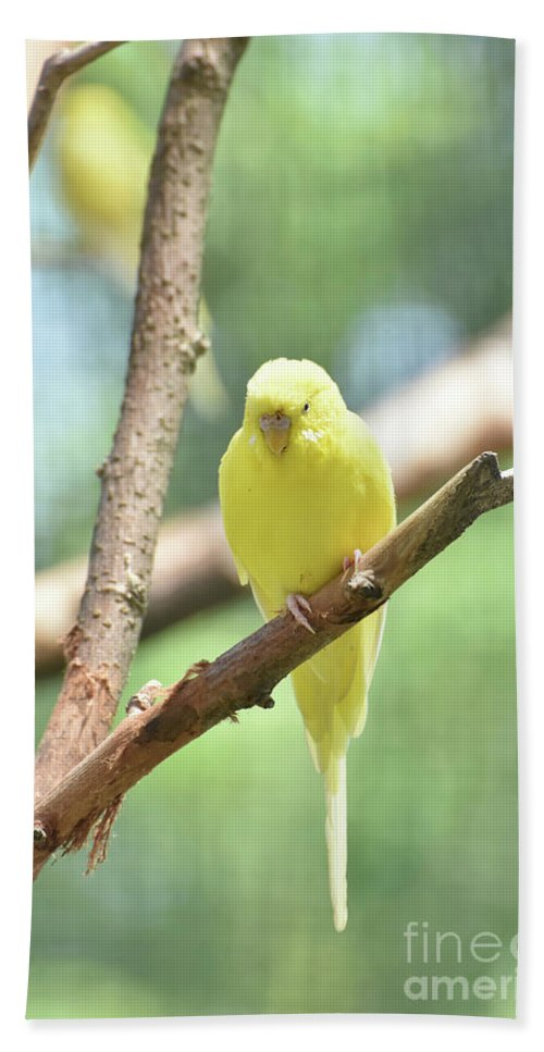 Budgie Hand Towel featuring the photograph Lovely Yellow Budgie Parakeet In The Wild by DejaVu Designs