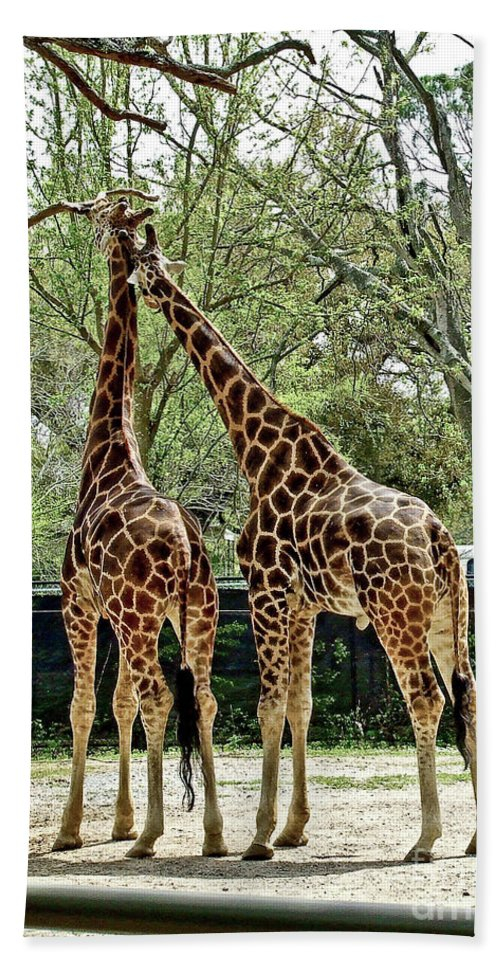 Giraffe Hand Towel featuring the photograph Loving by Frances Hattier
