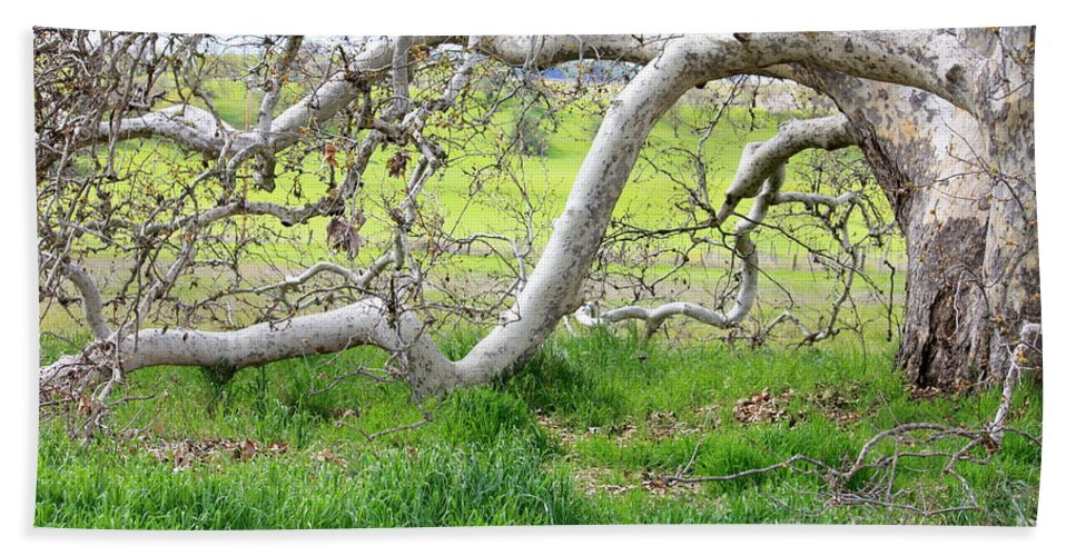 Landscape Bath Towel featuring the photograph Low Branches On Sycamore Tree by Carol Groenen