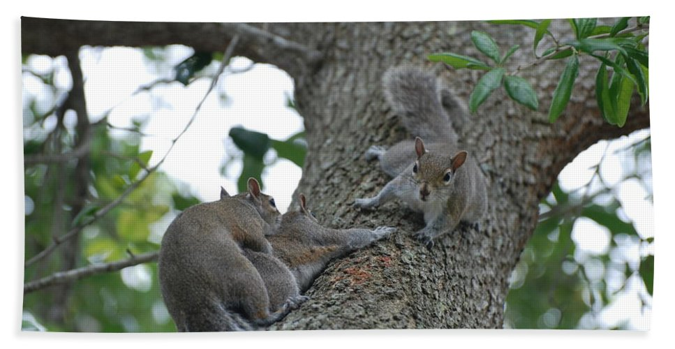 Squirrel Bath Towel featuring the photograph Luck Be A Lady by Rob Hans