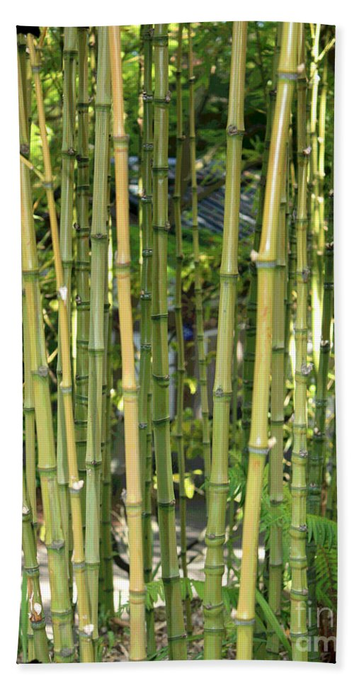 Bamboo Bath Sheet featuring the photograph Lucky Bamboo by Carol Groenen