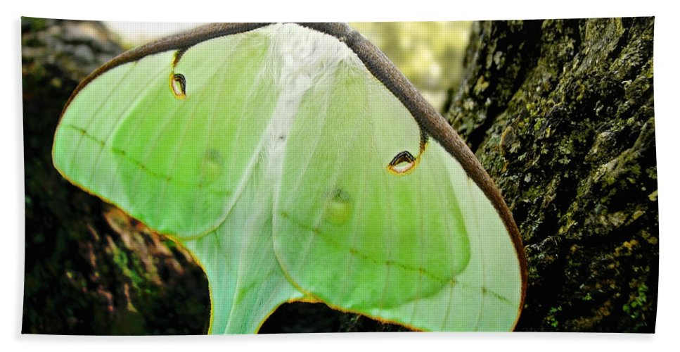 Macro Bath Towel featuring the photograph Luna Moth No. 3 by Todd A Blanchard
