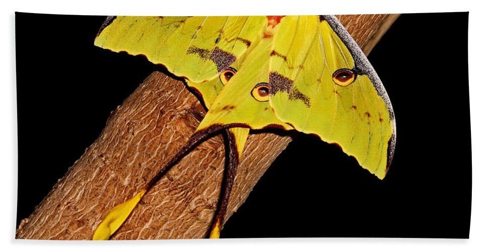 Luna Moth Hand Towel featuring the photograph Luna Moth by Judy Vincent