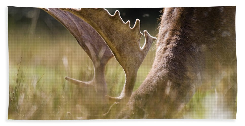 Fallow Deer Hand Towel featuring the photograph Lunch Time by Angel Tarantella