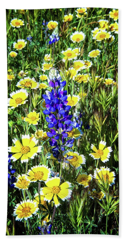 Lupine Bath Towel featuring the photograph Lupine Amidst Tidy Tips by Lynn Bauer